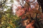 【ケアマネージャー/日光市】 居宅介護支援事業所 ケアプランセンター 愛泉 (正社員)の画像3